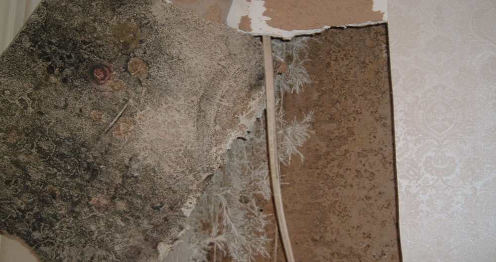 Mold Remediation in Drywall